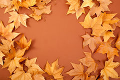 Autumn fall dired leaves border fame on brown Royalty Free Stock Image