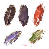 Autumn fall dried tree leaf set isolated.  royalty free illustration