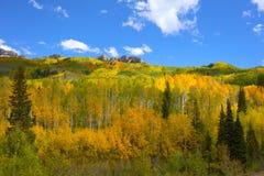 Autumn Fall färger av asp- dungar i Kebler passerandeColorado asp- sidor vänder den gula apelsinen royaltyfria bilder