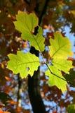 Autumn, Fall Foliage, Golden Autumn Royalty Free Stock Photo