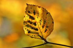 Autumn, Fall Foliage, Leaves Stock Photo