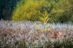 Autumn or Fall Foliage Textures Stock Photo