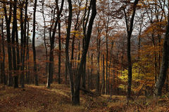 Autumn/Fall forest. In lovely colors Stock Photos