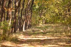 Autumn fall forest Stock Photography