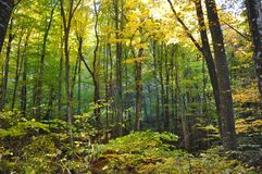 Autumn fall forest Royalty Free Stock Photos