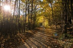 Autumn fall forest Stock Image