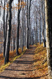 Autumn (fall) forest Royalty Free Stock Photography