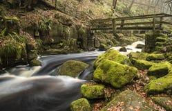 Autumn Fall forest landscape stream flowing through golden vibra Stock Images