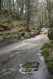 Autumn Fall forest landscape stream flowing through golden vibra Royalty Free Stock Photography
