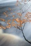 Autumn Fall forest landscape stream flowing through golden vibra Stock Image