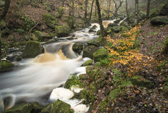Autumn Fall forest landscape stream flowing through golden vibra Royalty Free Stock Images