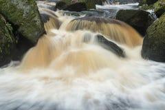 Autumn Fall forest landscape stream flowing through golden vibra Stock Photos
