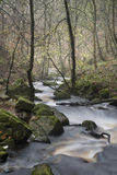 Autumn Fall forest landscape stream flowing through golden vibra Stock Photography