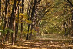 Autumn fall forest Stock Photo