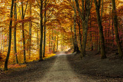Autumn fall forest with pathway Royalty Free Stock Image