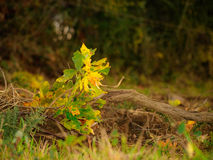 Autumn fall forest scene. Colors and forms on autumn fall scene Royalty Free Stock Photography