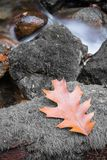 Autumn fall forest scenery with river brook flowing and oak maple tree leaf close up Royalty Free Stock Photos