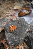 Autumn fall forest scenery with river brook flowing and oak maple tree leaf close up. France Stock Photos