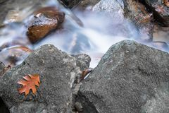 Autumn fall forest scenery with river brook flowing and oak maple tree leaf close up. France Stock Image