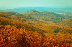 Autumn forest view in mountain, forest landscape Royalty Free Stock Photo