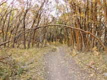 Autumn Fall forest views hiking through trees on the Rose Canyon Yellow Fork and Big Rock Trail in Oquirrh Mountains on the Wasatc. Walking through Autumn Fall royalty free stock images