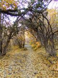 Autumn Fall forest views hiking through trees on the Rose Canyon Yellow Fork and Big Rock Trail in Oquirrh Mountains on the Wasatc. Walking through Autumn Fall stock photo