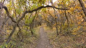 Autumn Fall forest views hiking through trees on the Rose Canyon Yellow Fork and Big Rock Trail in Oquirrh Mountains on the Wasatc. Walking through Autumn Fall royalty free stock photo
