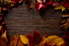 Autumn fall frame golden red leaves on wood Stock Image