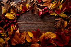 Autumn fall frame golden red leaves on wood. Background copy space Royalty Free Stock Photos