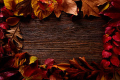 Autumn fall frame golden red leaves on wood. Background copy space Royalty Free Stock Image