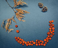 Autumn fall frame, pumpkins, cones, leaves. Closeup still life of cedar, arborvitae leaf branch, tiny red and orange pumpkin pods and two pine cones. Autumn Royalty Free Stock Photos