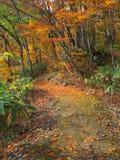 Autumn fall garden path Stock Images