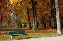 Autumn. Fall. Gold Trees in a Park in the typical Foliage colorful aspect, with a Bench in foreground.  royalty free stock photos