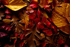 Autumn fall golden red leaves on wood Royalty Free Stock Images