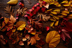 Autumn fall golden red leaves on wood Stock Image