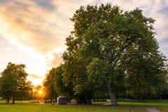 Autumn Fall Green Yellow Fiery för solnedgångsolsignalljuset himmel parkerar skogen royaltyfri fotografi
