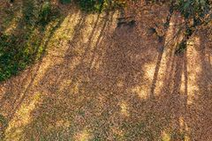 Autumn / Fall ground scene from above royalty free stock image