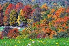 AUTUMN-FALL- Hillside d'automne colore des Wildflowers de premier plan photo libre de droits