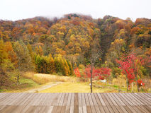 Autumn fall landscape forest at Shin-Hotaka Stock Photography