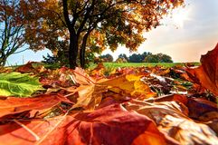 Autumn, fall landscape in park Royalty Free Stock Image