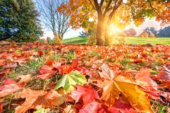 Autumn, fall landscape in park Royalty Free Stock Images