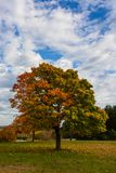 Autumn, fall landscape. Tree with colorful leaves. Autumn, fall landscape with a tree full of colorful, falling leaves, sunny blue sky Stock Photography