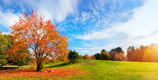 Autumn, fall landscape. Tree with colorful leaves. Autumn, fall landscape with a tree full of colorful, falling leaves, sunny blue sky. Wide perspective stock photography