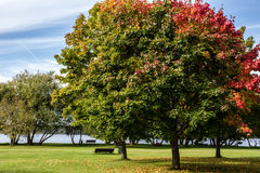 Autumn, Fall Landscape. Tree with colorful leaves. Autumn landscape with trees having green and red leaves near river, sunny blue sky. Shot in Latvia. Perfect Royalty Free Stock Photos