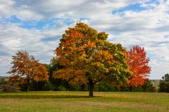 Autumn, fall landscape. Tree with colorful leaves. Autumn, fall landscape with a tree full of colorful, falling leaves, sunny blue sky Stock Photo