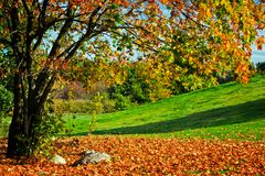 Free Autumn, Fall Landscape. Tree With Colorful Leaves Royalty Free Stock Photography - 46805597