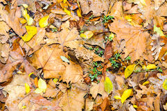 Autumn fall leaf background texture wallpaper Stock Image