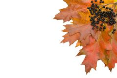 Autumn fall leaf corner Royalty Free Stock Image