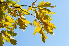 Autumn, fall, leaf fall, fall of the leaf. The third season of the year, when crops and fruits are gathered and leaves fall, in the northern hemisphere from stock image