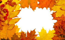 Autumn fall leaf frame Stock Photos